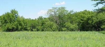 Flint Hills Pasture